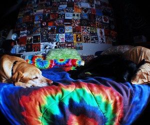 dog, bed, and bedroom image