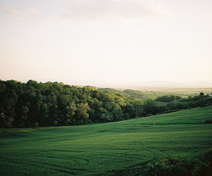 nature, green, and photography image