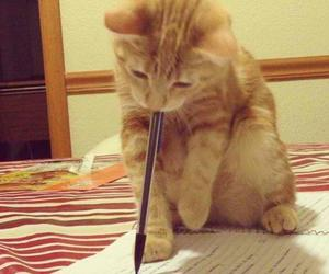 cat and writing image