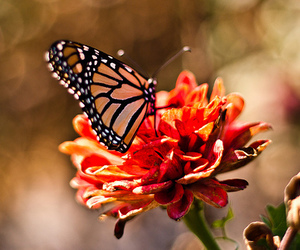 butterfly, flowers, and photography image