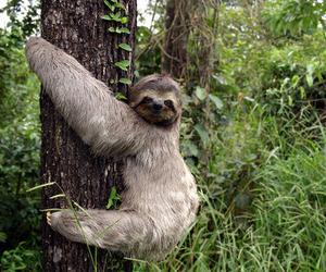 animal, sloth, and boho image