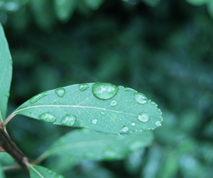 green, leaves, and raindropes image