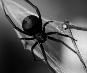 goth, spider, and death image