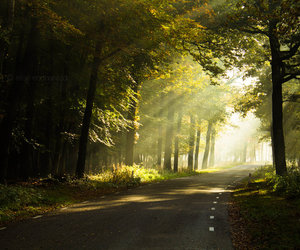 forest, haze, and road image
