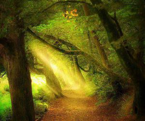beautifull, forest, and light image