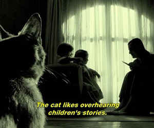 cat, amelie, and stories image