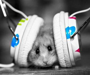 music, hamster, and animal image
