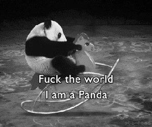 black and white, panda, and text image