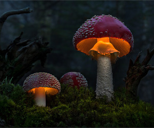 forest and mushroom image