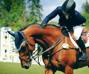 horse, jumping, and sport image