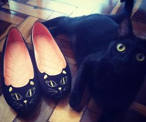 cat, shoes, and black image