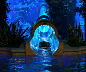 water, fish, and slide image