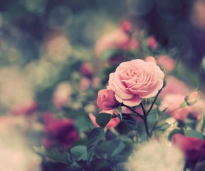 beautiful, photography, and flowers image