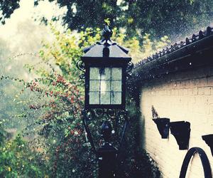garden, rain, and light image