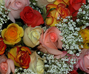 beautiful nature, blooms, and rose image