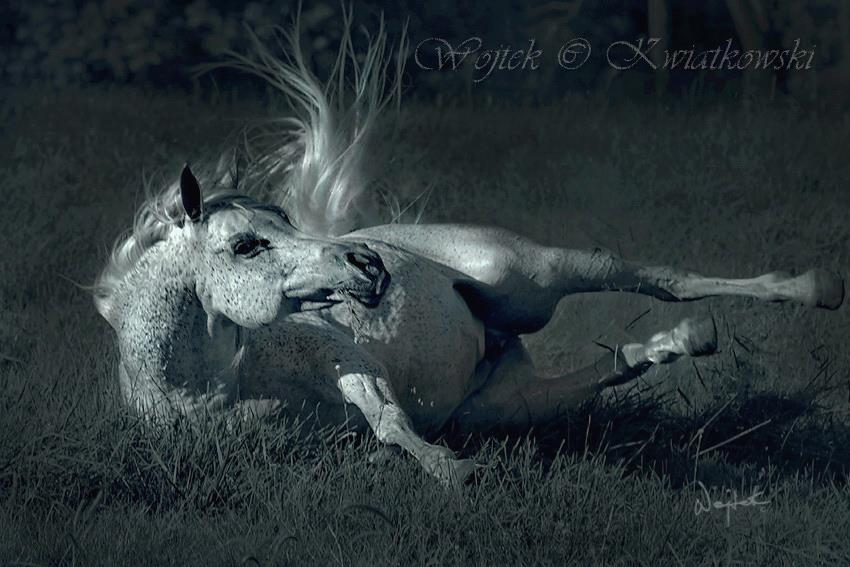 blakc and white, horses, and animals image