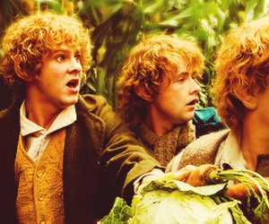 merry, pippin, and frodo image