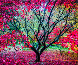 awesome, beautiful, and colourful image