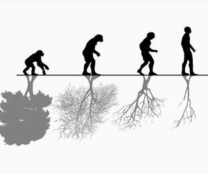 evolution, human, and nature image