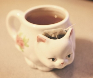 cat, tea, and cup image