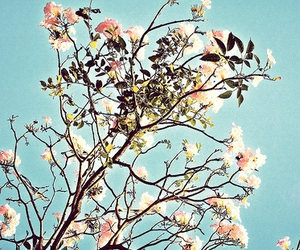 away, blossom, and blue image