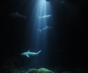 shark, ocean, and sea image