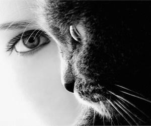 cat, eyes, and black image