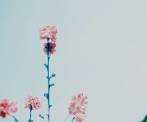 delicate, flowers, and haze image