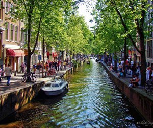 amsterdam, boat, and tree image