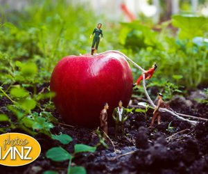 apple, nature, and couple image