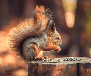autumn, squirrel, and forest image