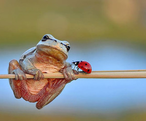animal, frog, and ladybug image
