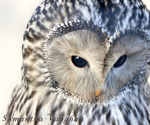 animal, cute, and owl image