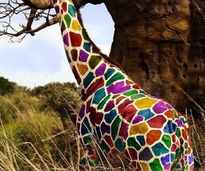 giraffe, animal, and colors image