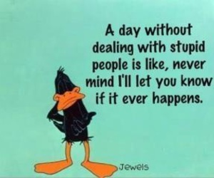 duck, stupid, and quote image