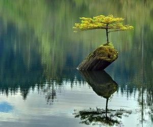 bonsai image