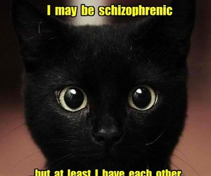 cat, funny, and schizophrenic image