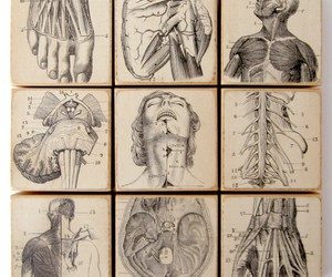 anatomy, draw, and drawing image