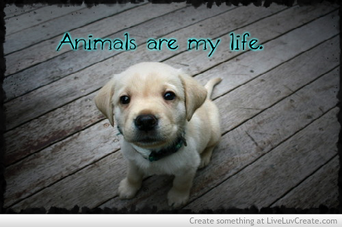 Love Animals Discovered By LiveLuvCreate On We Heart It Custom Love Animal Quotes