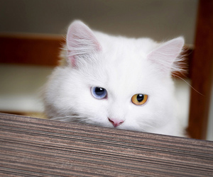 blue, cat, and cool image