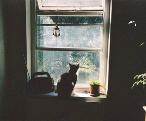 cat, indie, and window image