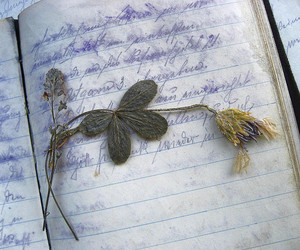 flower, book, and diary image