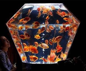 fish, aquarium, and theme image