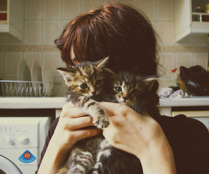 cat, girl, and kitten image