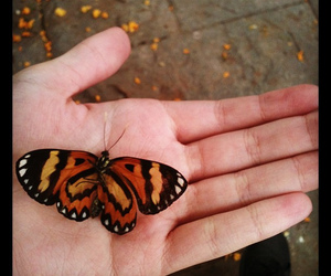 borboleta, butterfly, and hand image