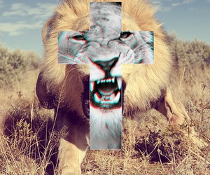 black and white, lion, and photography image