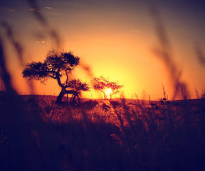 africa, namibia, and nature image