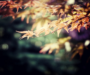 leaves, tree, and autumn image