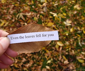 love, leaves, and quote image