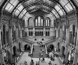 giant, natural history museum, and stairs image